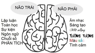 Cách thức hoạt động của hai bán cầu não